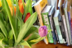 Are spring bulbs plants poisonous to dogs or cats?